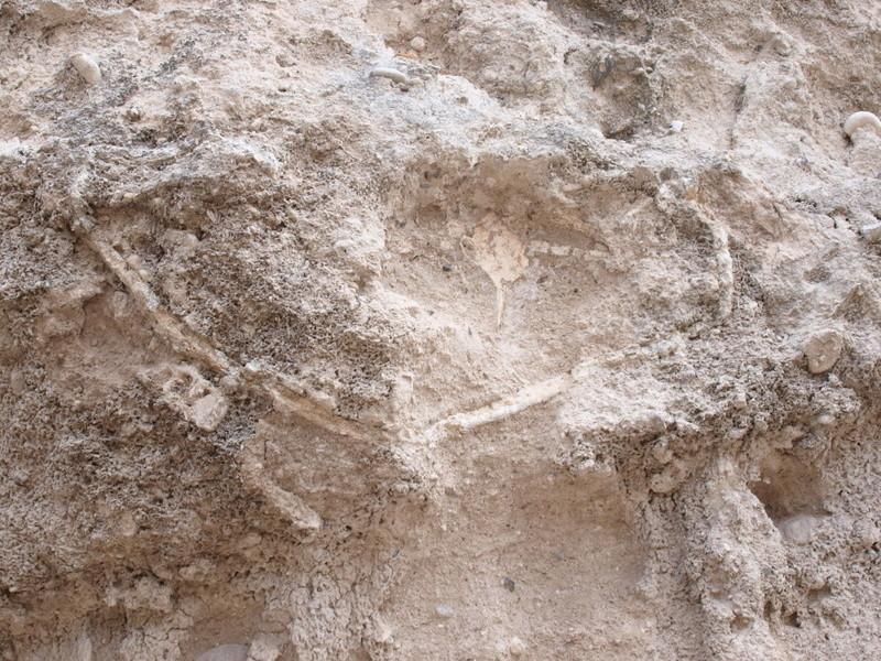 Dos prospecciones a la vez: fósiles y monedas Ol260710