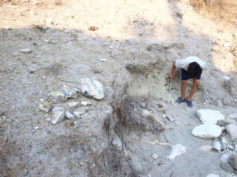 Dos prospecciones a la vez: fósiles y monedas Ol260711