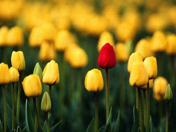 Pershendetje me nje lule per nje anëtarë? - Faqe 8 31e57210