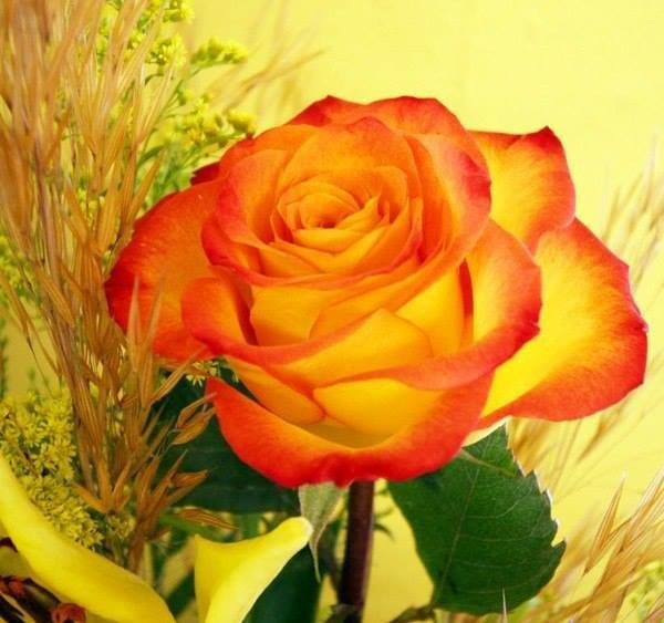 Pershendetje me nje lule per nje anëtarë? - Faqe 8 Ab0b6010