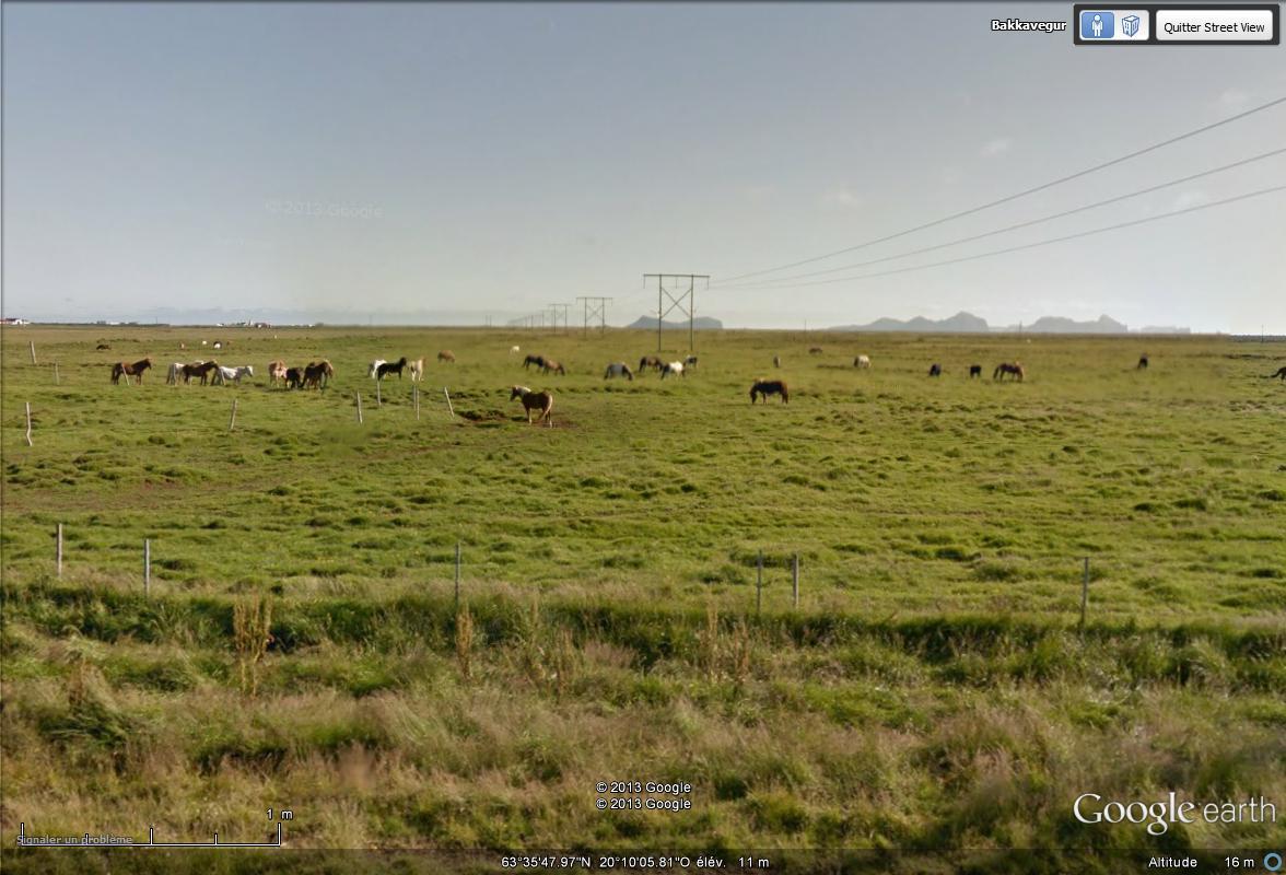 [Islande] - Street-view les cartes postales Chevau10