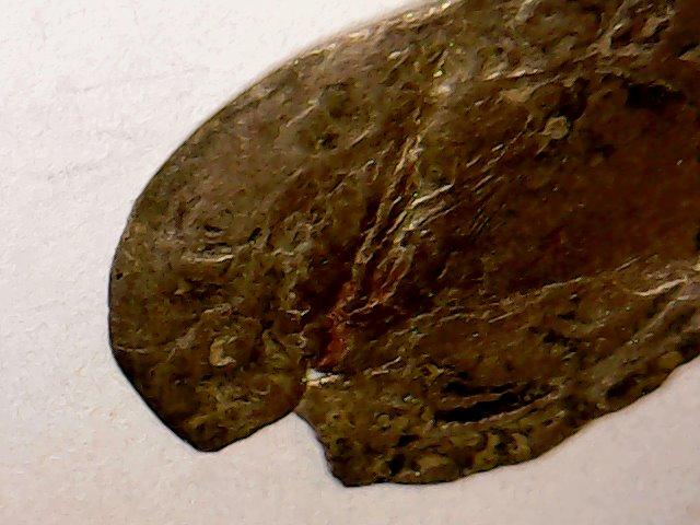 Charles VIII au Dauphin . 1483-1498 . Wed_ap23
