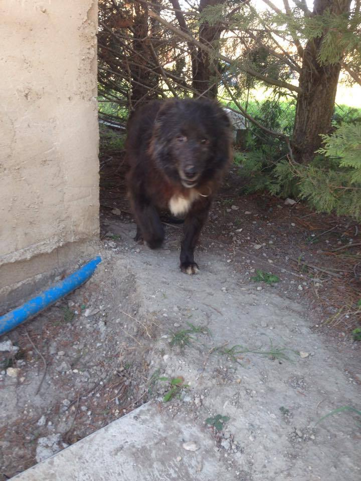 MOISE, mâle, taille moyenne, né environ en 2002 (Pascani) - REMEMBER ME LAND. Adopté par Sophie (depart Corse) 16996810