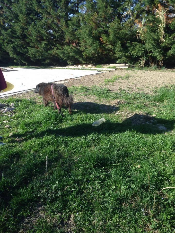 MOISE, mâle, taille moyenne, né environ en 2002 (Pascani) - REMEMBER ME LAND. Adopté par Sophie (depart Corse) 16997110