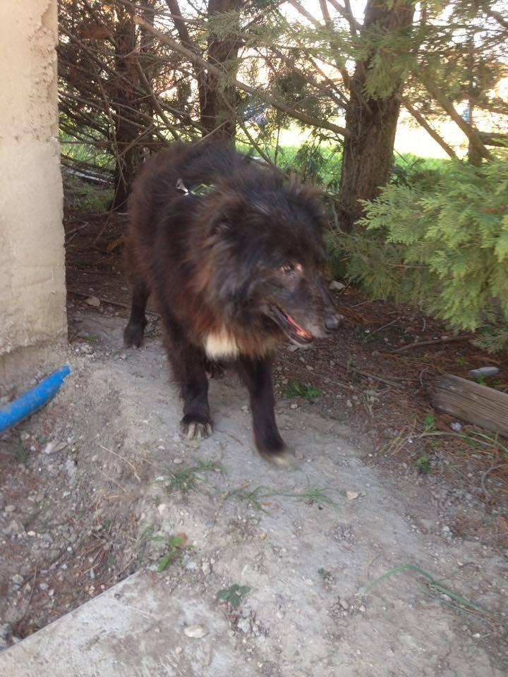 MOISE, mâle, taille moyenne, né environ en 2002 (Pascani) - REMEMBER ME LAND. Adopté par Sophie (depart Corse) 17006010