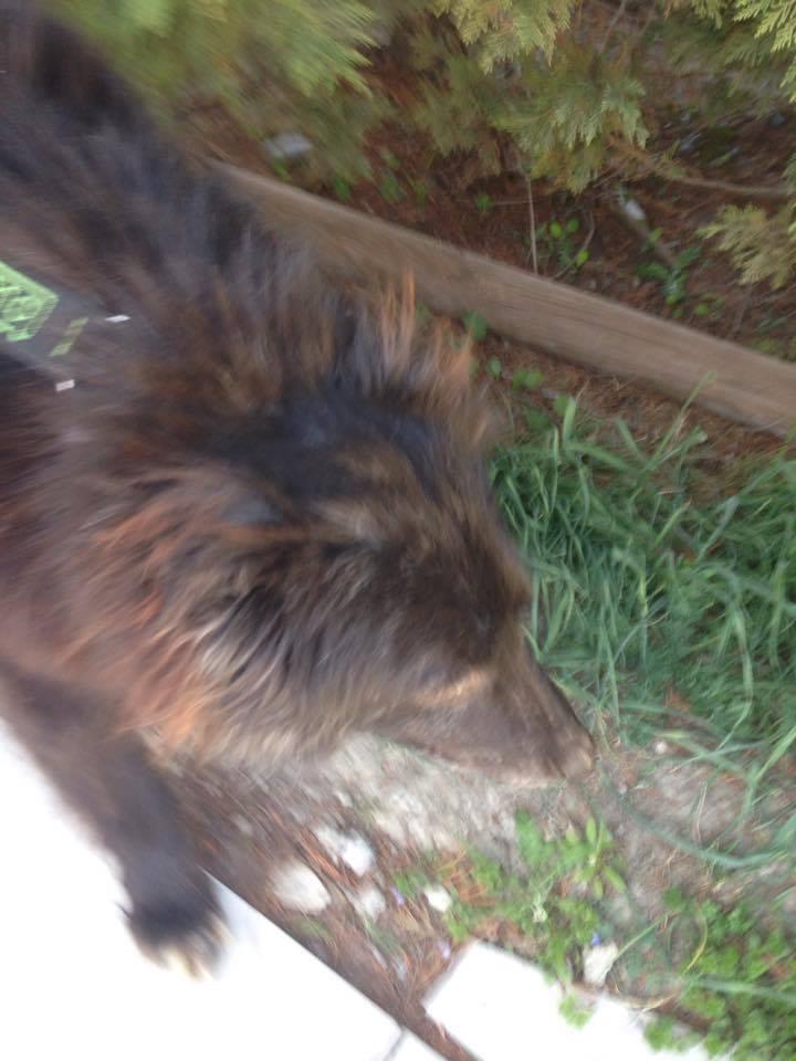 MOISE, mâle, taille moyenne, né environ en 2002 (Pascani) - REMEMBER ME LAND. Adopté par Sophie (depart Corse) 17012610