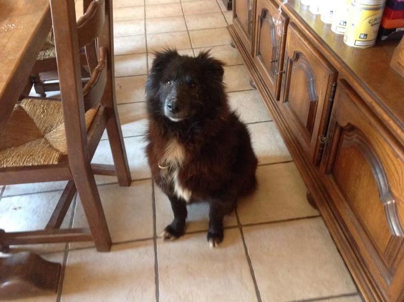 MOISE, mâle, taille moyenne, né environ en 2002 (Pascani) - REMEMBER ME LAND. Adopté par Sophie (depart Corse) 17028610
