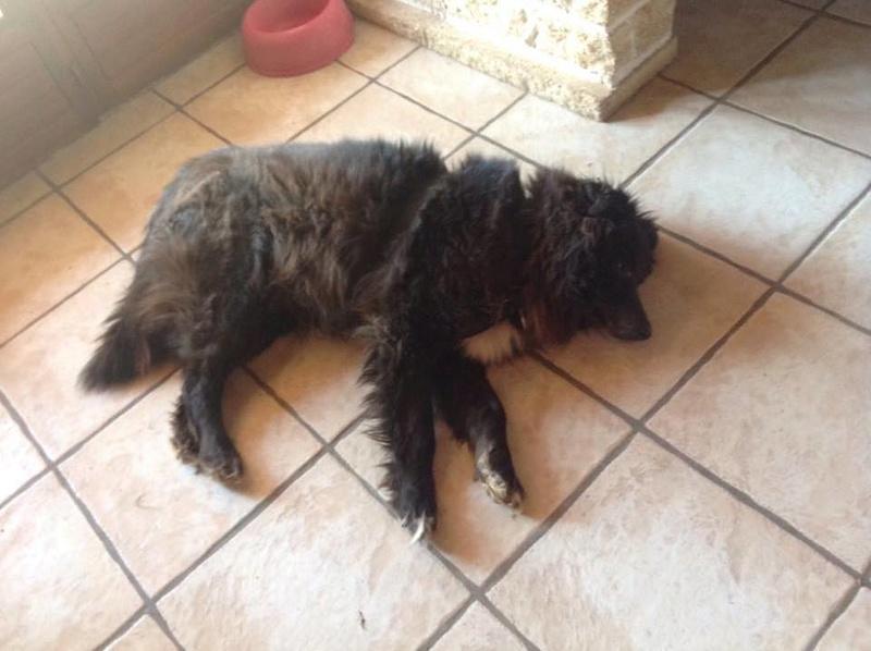 MOISE, mâle, taille moyenne, né environ en 2002 (Pascani) - REMEMBER ME LAND. Adopté par Sophie (depart Corse) 17028810