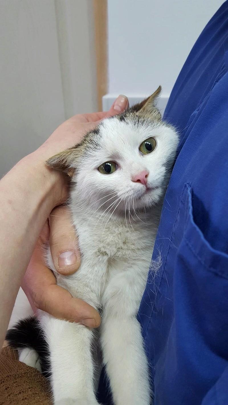 CRAPULE - chat mâle né en aout 2016 - ADOPTE EN ROUMANIE 17200012