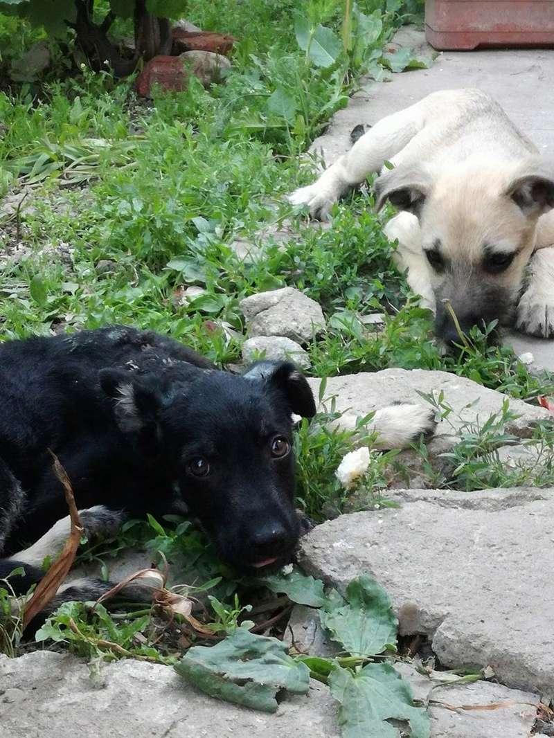 COCO - femelle croisée de taille moyenne à l'âge adulte, née en mars 2017 (Luiza Bucarest) - adoptée par Anaïs (02) 19047410