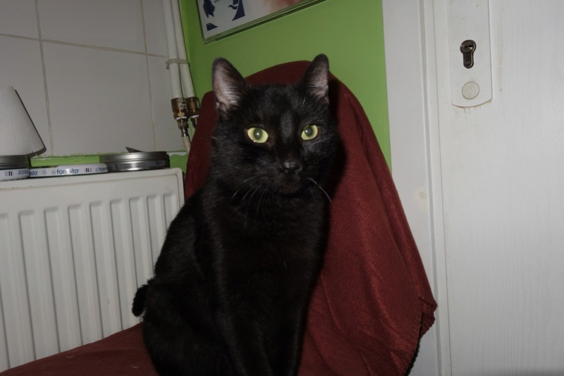 BENJY - chat mâle, né début 2016 - CARMINA BUCAREST. Réservé adoption via une autre asso Bb10