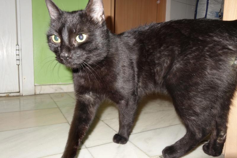 BENJY - chat mâle, né début 2016 - CARMINA BUCAREST. Réservé adoption via une autre asso Ben10