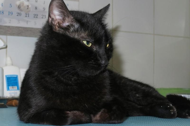 BENJY - chat mâle, né début 2016 - CARMINA BUCAREST. Réservé adoption via une autre asso Benji_11