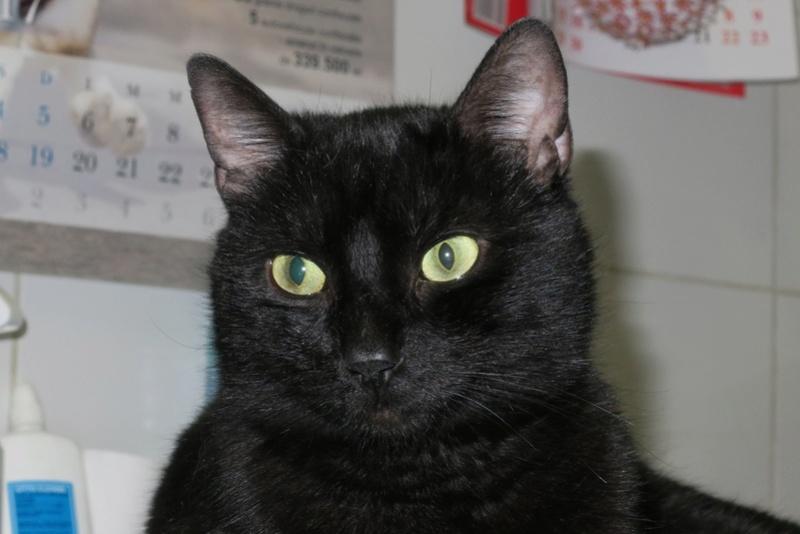 BENJY - chat mâle, né début 2016 - CARMINA BUCAREST. Réservé adoption via une autre asso Benji_12