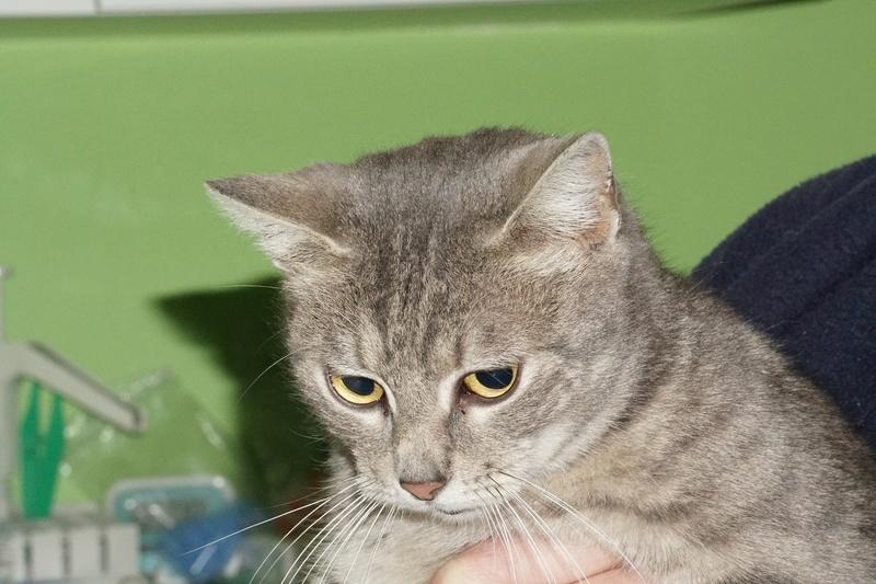 TIGRETTE - chat femelle, née début 2016 - CARMINA BUCAREST. Adoptée via une autre asso Dsc02710