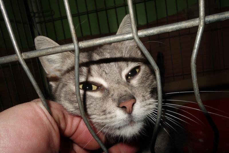 TIGRETTE - chat femelle, née début 2016 - CARMINA BUCAREST. Adoptée via une autre asso Dsc05310