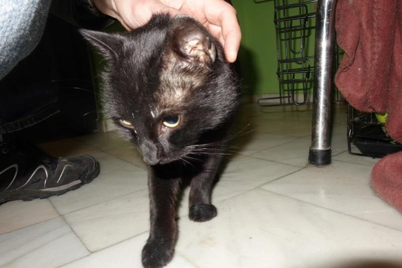 BENJY - chat mâle, né début 2016 - CARMINA BUCAREST. Réservé adoption via une autre asso Dsc06610