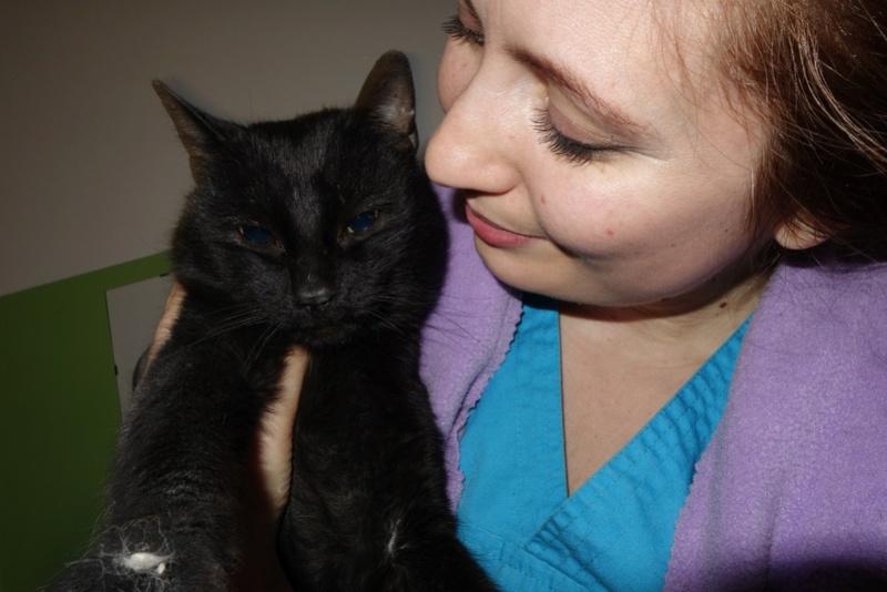 BENJY - chat mâle, né début 2016 - CARMINA BUCAREST. Réservé adoption via une autre asso Dsc06611