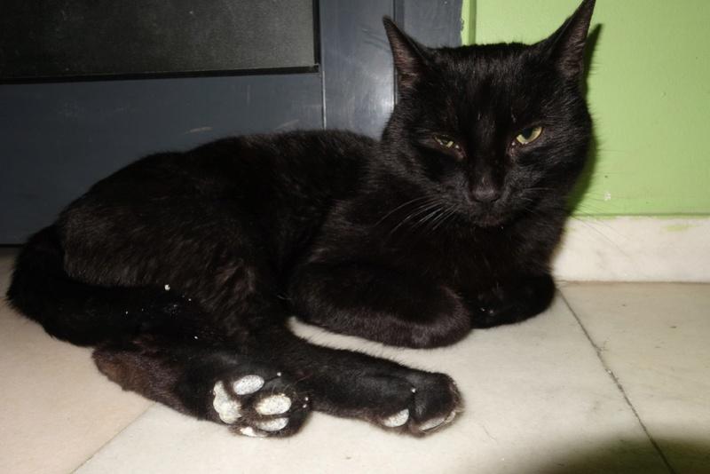 BENJY - chat mâle, né début 2016 - CARMINA BUCAREST. Réservé adoption via une autre asso Dsc06811