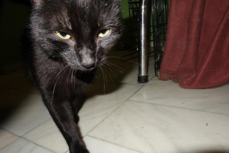 BENJY - chat mâle, né début 2016 - CARMINA BUCAREST. Réservé adoption via une autre asso Dsc07410