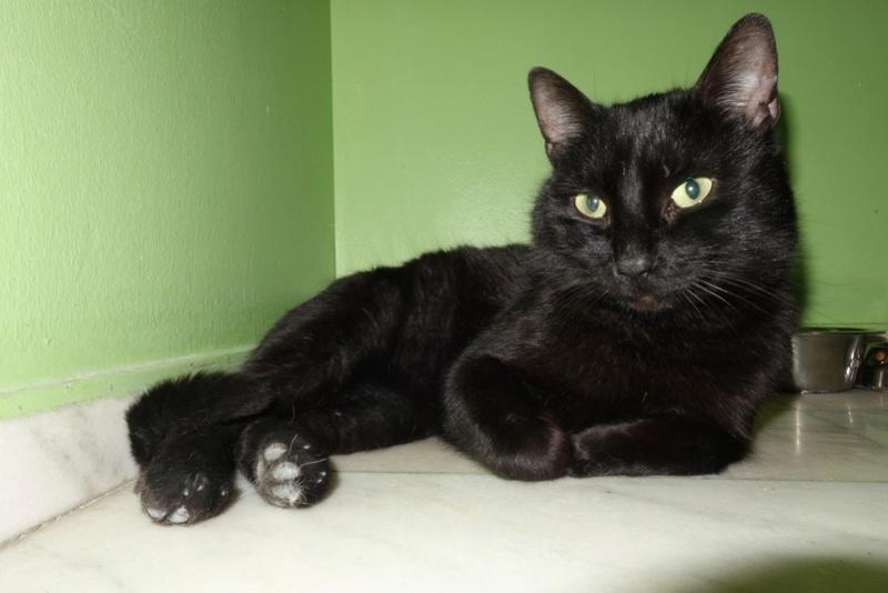 BENJY - chat mâle, né début 2016 - CARMINA BUCAREST. Réservé adoption via une autre asso Dsc07411
