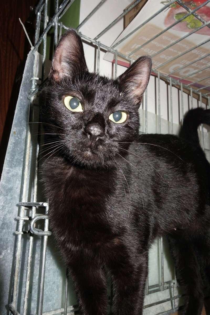 SERENA (Gato Nero) - chat femelle née en juin 2016 - CARMINA BUCAREST.  Réservée adoption via une autre asso Sere10