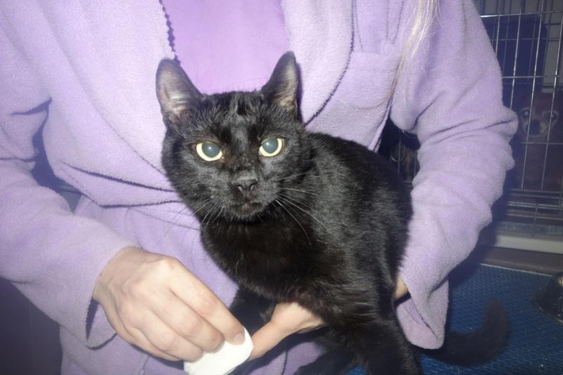 SERENA (Gato Nero) - chat femelle née en juin 2016 - CARMINA BUCAREST.  Réservée adoption via une autre asso Serse10