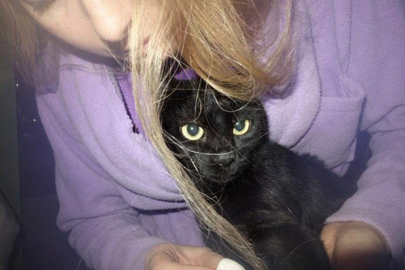 SERENA (Gato Nero) - chat femelle née en juin 2016 - CARMINA BUCAREST.  Réservée adoption via une autre asso Ss10