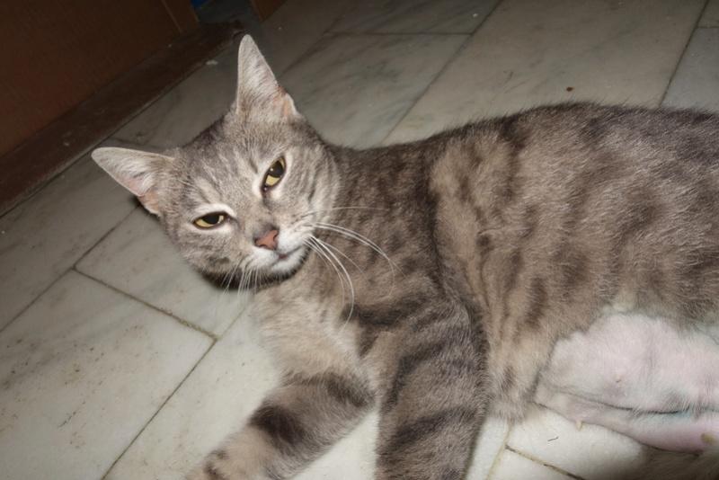 TIGRETTE - chat femelle, née début 2016 - CARMINA BUCAREST. Adoptée via une autre asso Tt10