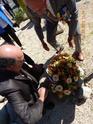 Inauguration du Rond-Point des Anciens-Combattants , avec l'apposition d'une plaque commémorative en hommage à Martial COURBON Adjudant-Chef , Président des Anciens-Combattants ACPG de Bages .(Photographies de Raphaël ALVAREZ) 3410