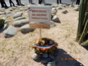Inauguration du Rond-Point des Anciens-Combattants , avec l'apposition d'une plaque commémorative en hommage à Martial COURBON Adjudant-Chef , Président des Anciens-Combattants ACPG de Bages .(Photographies de Raphaël ALVAREZ) 5110