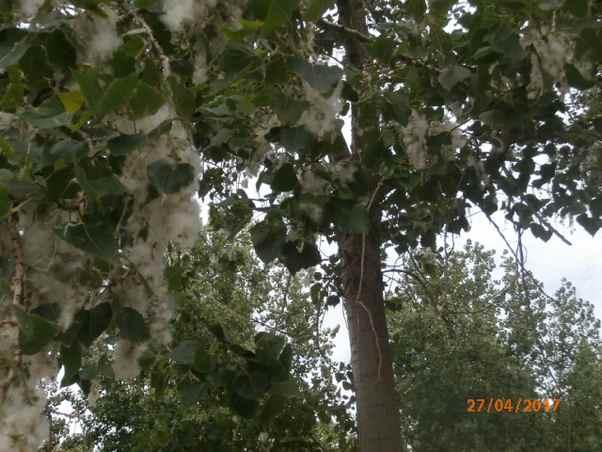 Quel est le nom de cet arbre ? Qu_est10