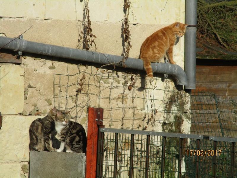 pour les amoureux des chats - Page 2 Img_3024