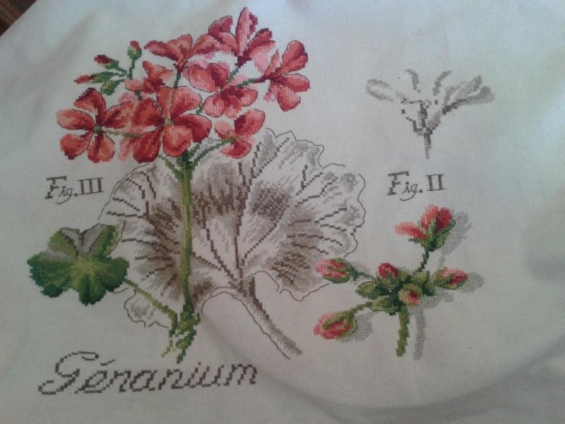 un géranium - Page 2 20140510