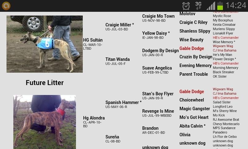 CACHORROS A LA VENTA/NIETOS DE CRAIGIE MILLER Y SPANISH HAMMER Screen10