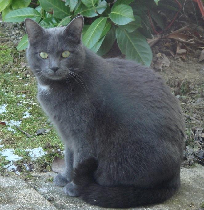 Perdu chatte grise sur Camon Lola1110