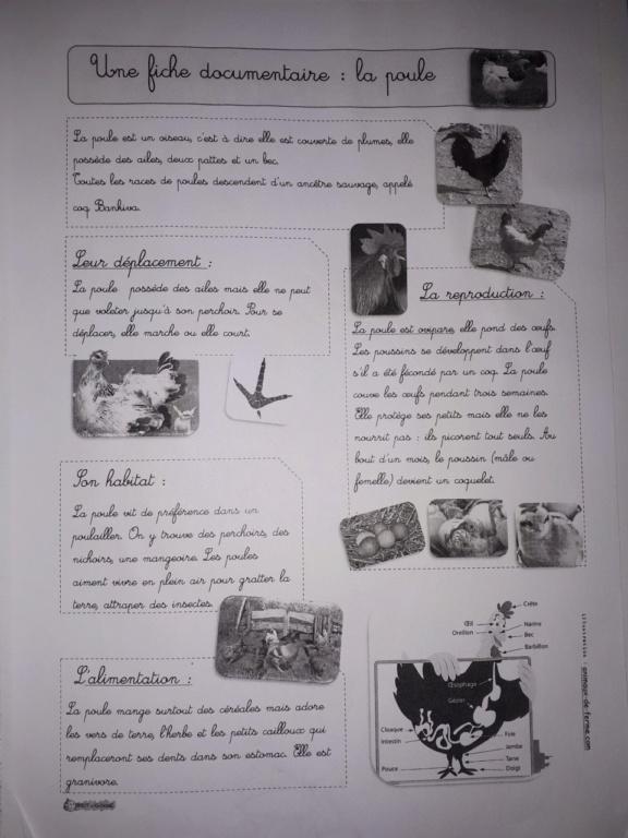 Les trucs poules - Page 2 Thumbn36