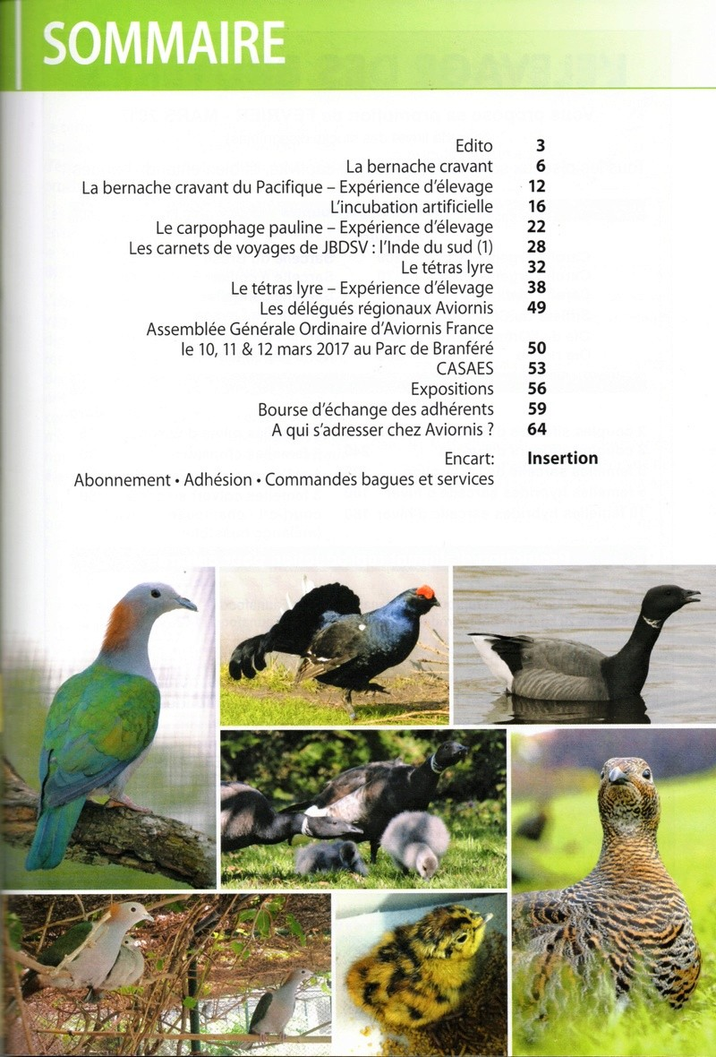 AVIORNIS FRANCE. - Page 5 Img52710
