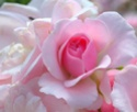 Les mères dans la Bible sont des femmes honorées et leur influence est reconnue __396020