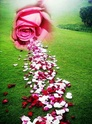 La nouvelle vie c'est « marcher dans l'Esprit » ou « selon l'Esprit » __840222