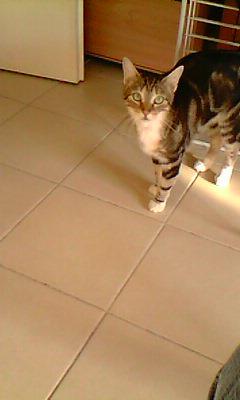 Ilios chat né en septembre 2012  - Page 2 Img11511