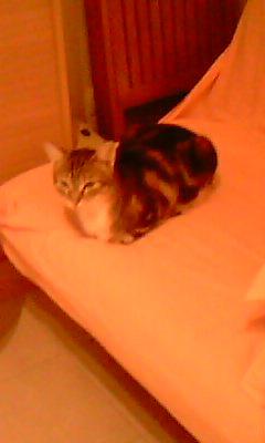 Ilios chat né en septembre 2012  - Page 2 Img11513