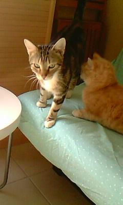 Ilios chat né en septembre 2012  - Page 2 Img11610