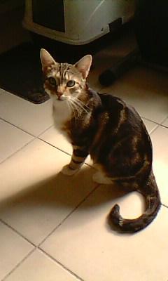 Ilios chat né en septembre 2012  - Page 2 Img11611