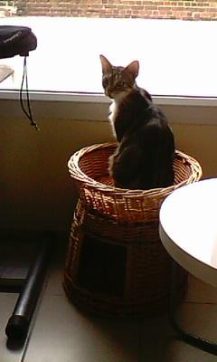 Ilios chat né en septembre 2012  - Page 2 Img11612