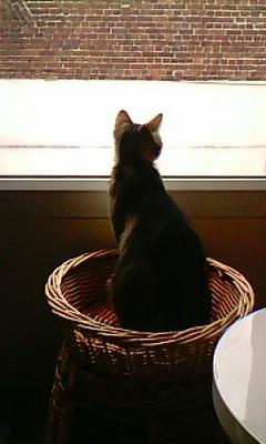 Ilios chat né en septembre 2012  - Page 2 Img11613