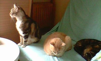 Ilios chat né en septembre 2012  - Page 2 Img11615