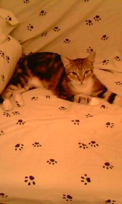 Ilios chat né en septembre 2012  - Page 2 Img11710