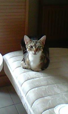 Ilios chat né en septembre 2012  - Page 2 Img11711