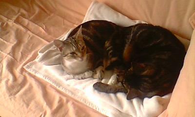 Ilios chat né en septembre 2012  - Page 2 Img11811